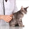 Ветеринарные клиники в Дальнем Константиново